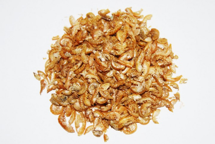 Gammarus (Bachflohkrebse) - 100Gramm